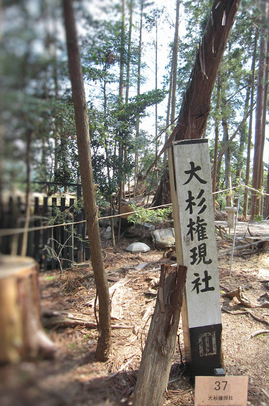 大杉権現社と神木