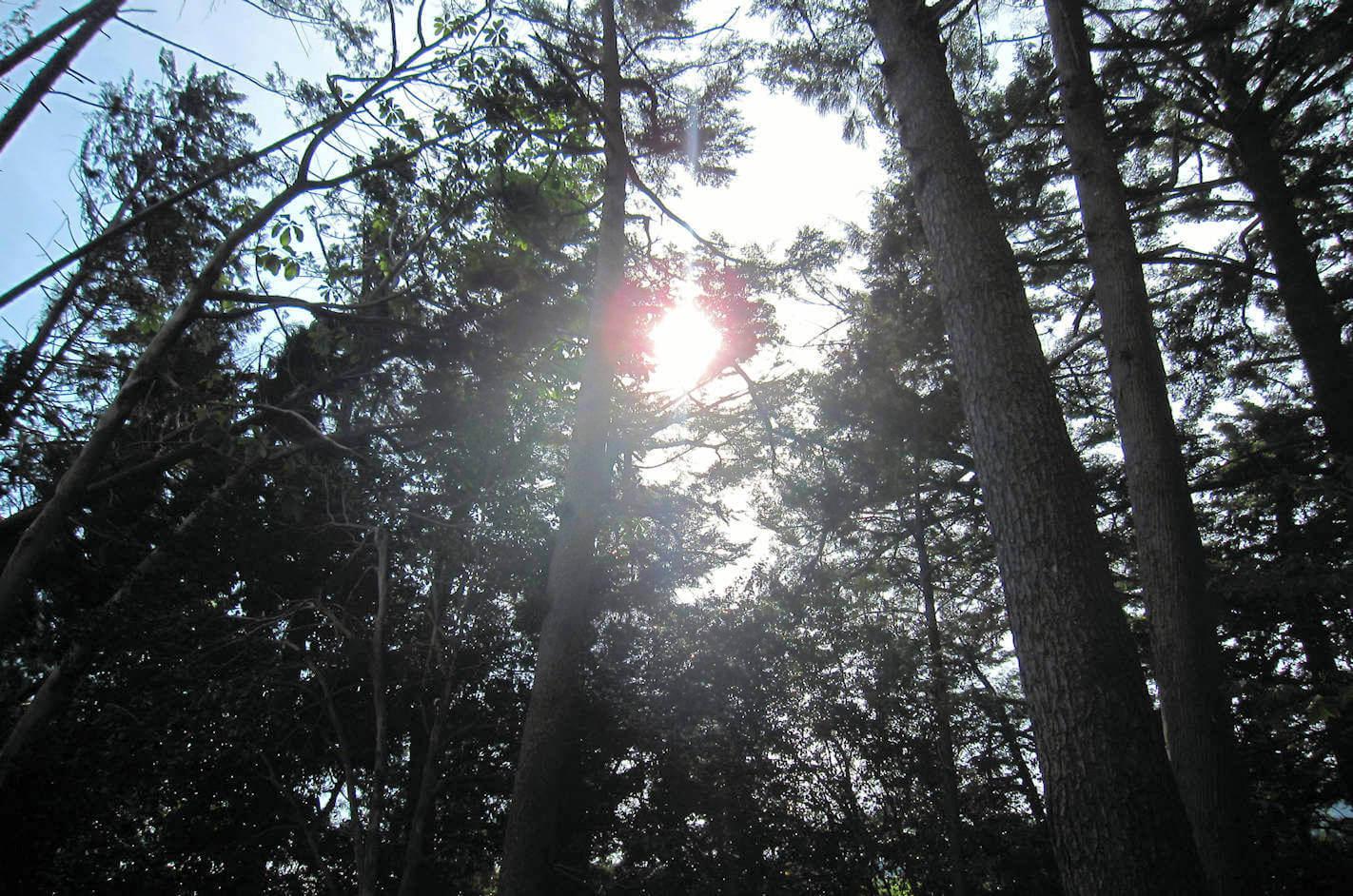 大杉苑瞑想道場を照らす天の光