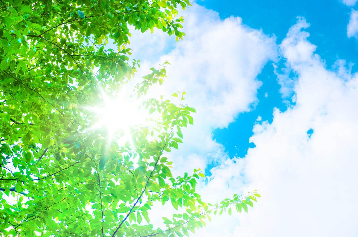 森の中で頭上の太陽を見上げたイメージ