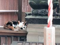 小さな神社さんで眠る猫ちゃん